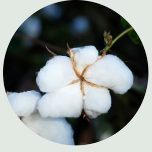 image of cotton from our natural materials